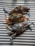 Frische Krabbe für das Kochen Lizenzfreie Stockbilder