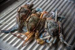 Frische Krabbe für das Kochen Stockfotos