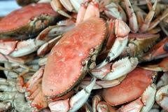 Frische Krabben stockfoto