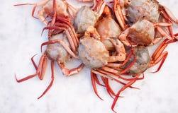 Frische Krabben gesehen von oben Lizenzfreie Stockfotos