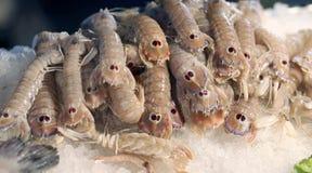 Frische Krebstiere nannten Gottesanbeteringarnele für Verkauf im Fischmarkt stockbilder