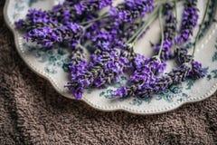 Frische Lavendelblumen stockfoto