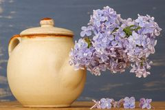Frische lila Blumen im beige Teetopf gegen blauen Hintergrund Stockbilder