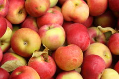 Frische lokale Äpfel Stockfoto