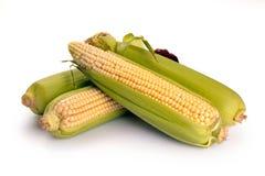 Frische Maisfrüchte mit grünen Blättern Stockfoto