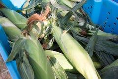 Frische Maiskörner lizenzfreies stockfoto