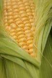 Frische Maiskörner Lizenzfreies Stockbild