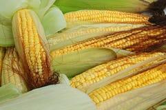 Frische Maiskörner Stockfoto