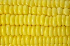 Frische Maiskolben Lizenzfreies Stockfoto