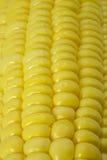 Frische Maiskolben Stockfoto