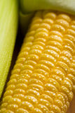 Frische Maiskörner Stockfotografie