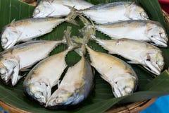 Frische Makrele Stockbilder