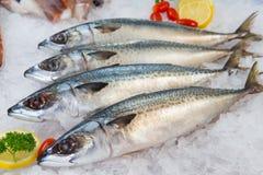 Frische Makrele oder Saba Fish auf Eis im Markt Lizenzfreie Stockbilder
