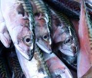 Frische Makrelenfische auf Eis Lizenzfreie Stockfotos