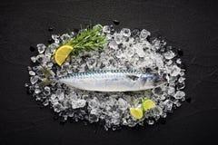 Frische Makrelenfische auf Eis auf einer schwarzen Steintabelle Lizenzfreie Stockfotos
