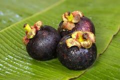 Frische Mangostanfrucht auf Bananenblatt Stockbilder