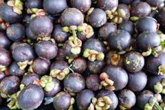 Frische Mangostanfrucht frisch ausgewählt vom Garten lizenzfreies stockfoto