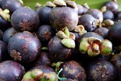Frische Mangostanfrucht frisch ausgewählt vom Garten lizenzfreie stockbilder