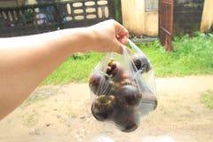 Frische Mangostanfrucht im Korb Thailand Stockbilder
