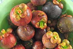 Frische Mangostanfrucht im Korb Thailand Lizenzfreie Stockfotografie