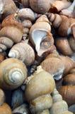 Frische Meeresfrüchte Lizenzfreie Stockfotografie
