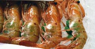 Frische Meeresfrüchte Lizenzfreie Stockbilder
