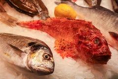 Frische Meeresfrüchte für Verkauf in einem lokalen Markt Stockfotos