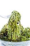 Frische Meerespflanze stockfotos