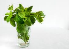 Frische Minzen-Blätter in einem Glas auf weißem Hintergrund Gut für die Auffrischung von gesunden Getränken stockbilder