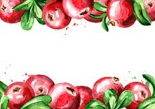Frische Moosbeerhorizontale Schablone Gezeichnete Illustration des Aquarells Hand, lokalisiert auf weißem Hintergrund Lizenzfreies Stockfoto