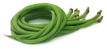 Frische Moringa.oleifera oder sonjna lizenzfreie stockfotos