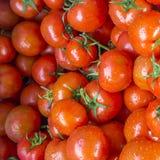 Frische nasse rote Tomate Lizenzfreie Stockbilder