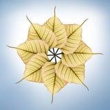 Frische, neue u. helle peepal (pipal) Blätter Lizenzfreie Stockfotografie