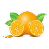 Frische Orange lizenzfreie abbildung