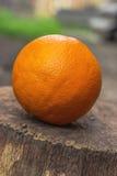 Frische Orange Stockfotos