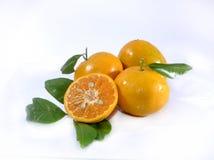 Frische Orange Lizenzfreie Stockfotografie