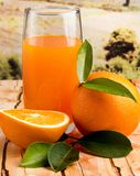 Frische orange Juice Shows Tropical Fruit And-Orangen lizenzfreie stockfotos