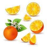 Frische Orange mit Blumen Stockbild