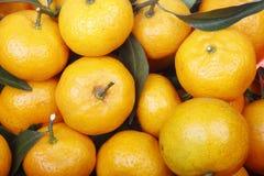 Frische Orangen. Lizenzfreie Stockfotos