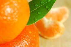 Frische Orangen Lizenzfreies Stockbild