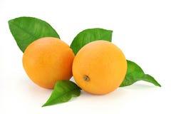 Frische Orangen mit Blättern Stockbild