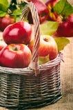 Frische organische Äpfel lizenzfreie stockfotos