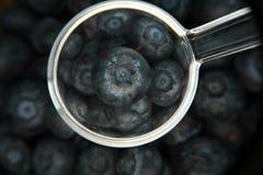 Frische organische Blaubeeren Lizenzfreies Stockbild