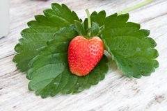 Frische organische Erdbeeren stockfotos