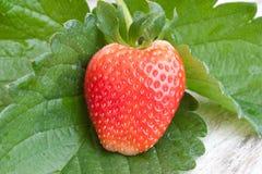 Frische organische Erdbeeren stockbilder