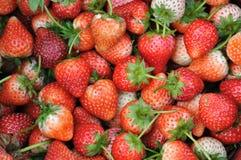 Organische Erdbeeren im Korb Stockfoto