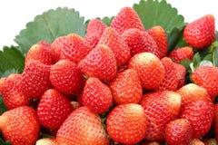 Organische Erdbeeren im Korb Stockfotografie