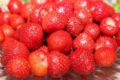 Frische organische Erdbeeren Sommer Stockfotografie