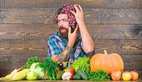 Frische organische Ernte Trauben von eigenem Garten Landwirtschaft des Konzeptes Der Landwirt, der auf Trauben stolz ist, ernten  stockfotografie