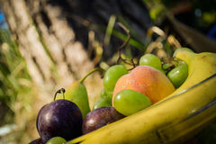 Frische organische Früchte auf der Platte Lizenzfreies Stockbild